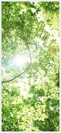 樹木葬墓地和(なごみ)